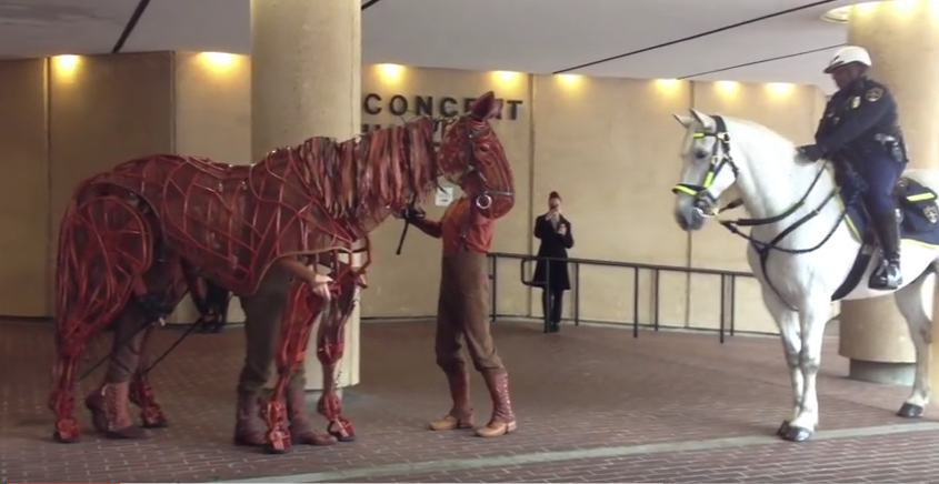 Click to watch Joey from the play, WAR HORSE, meet an actual horse!