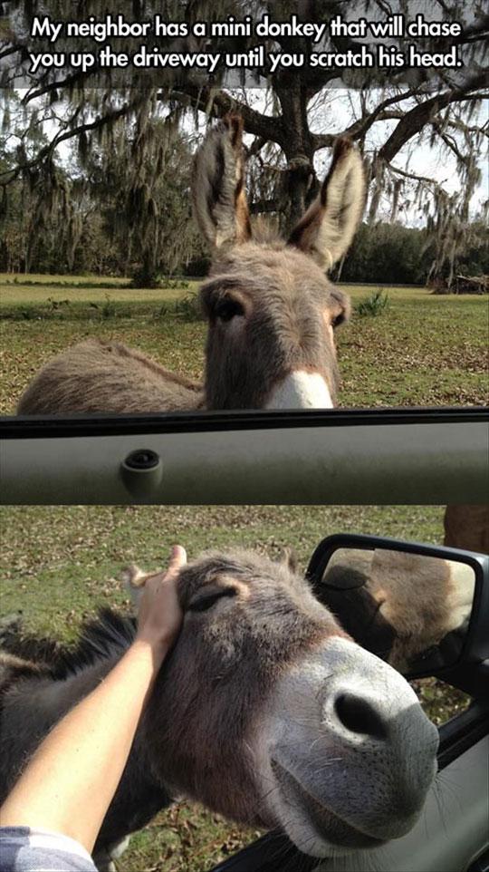 Mini-Chasing-Donkey