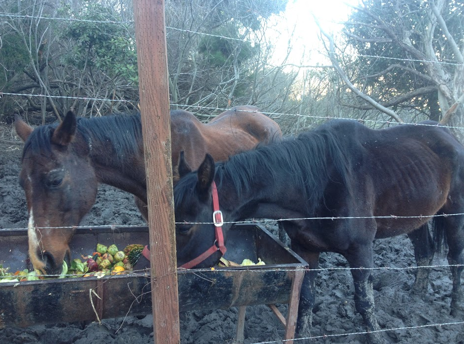 STARVED, STANDING IN MUD AND BARBED WIRE, GIVEN ONLY FRUIT AND ROTTEN VEGETABLES TO EAT.
