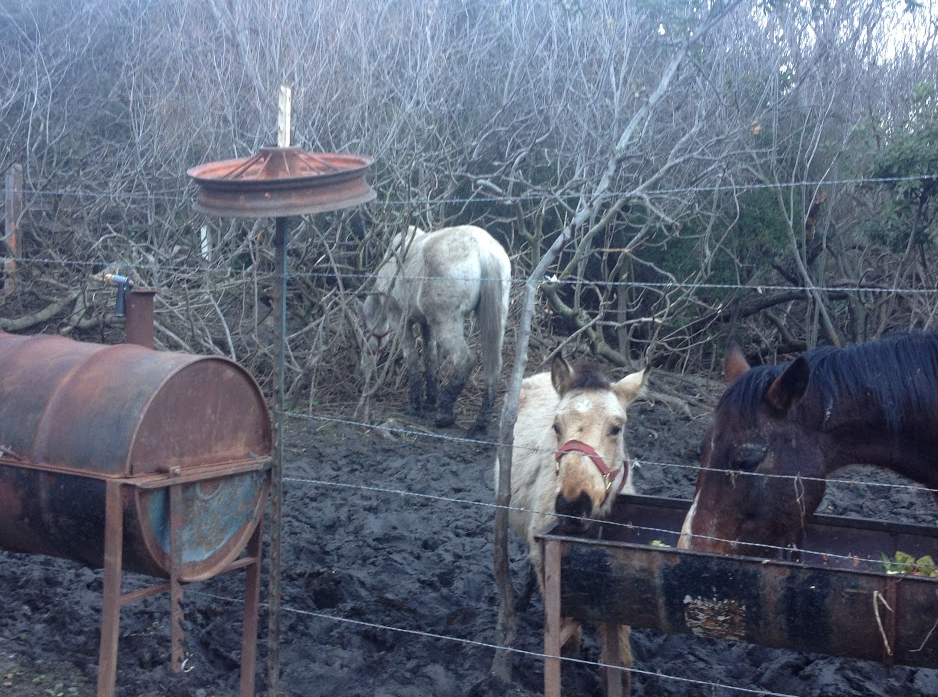 Our February Bucket Fund horses were starved, living in knee high muck, covered in ticks and only given rotten fruit and vegetables to eat! Click image to read their story and donate! THANK YOU!