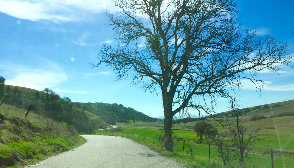 This is the view from my car driving up Hog Canyon. Gentle rolling hills and oak trees. My favorite! I have my saddle, just in case they let me use it!
