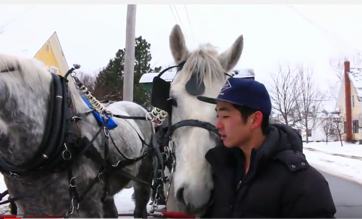 Click image to watch the story of how these Draft horses came to save the day!