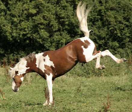 horse-kicking1