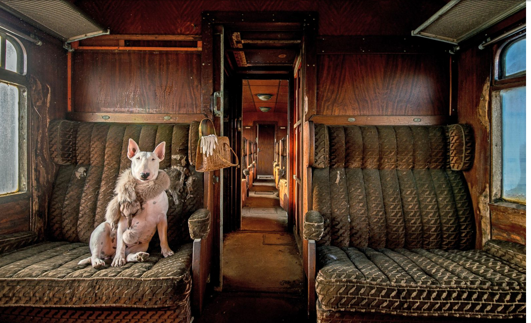 My bull terrier Claire photographed in an abandoned train, one of a series that I am currently working on The series is called Leave Only Pawprints Urbex Adventures With My Bull Terrier Claire