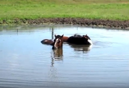 Click image to watch these horses playing by themselves.