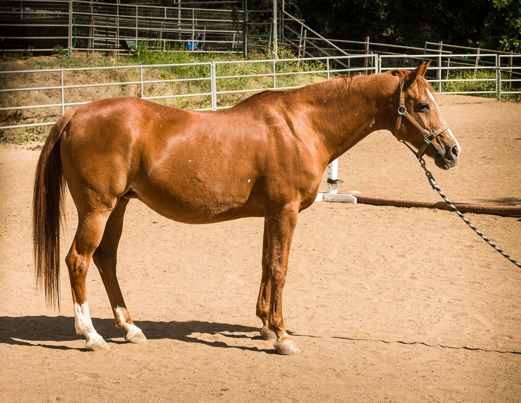 horse-5-1024x793