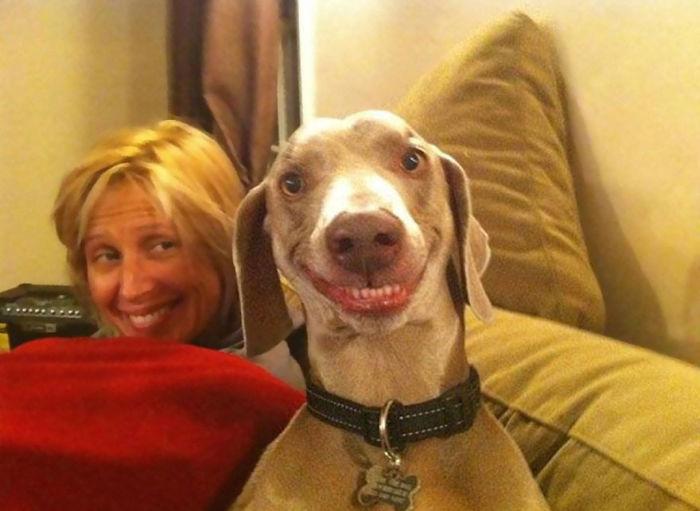 perros-sonrientes-5