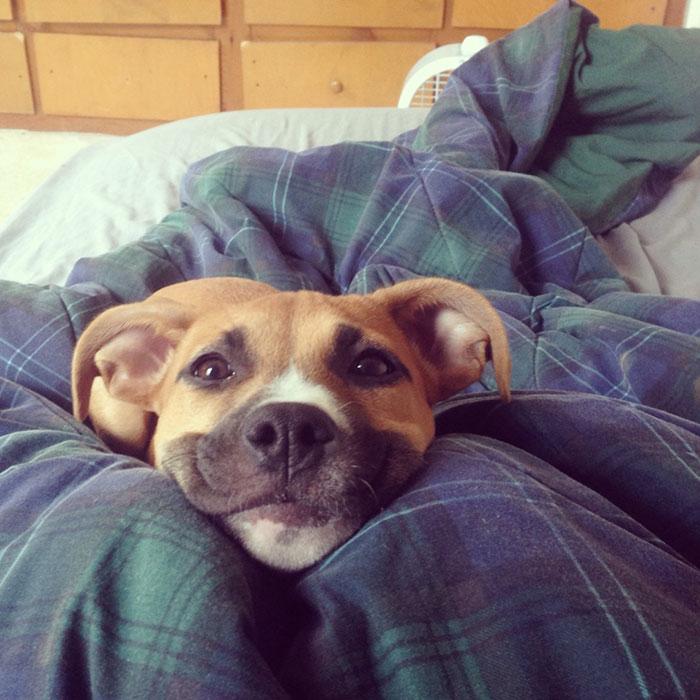 perros-sonrientes-8