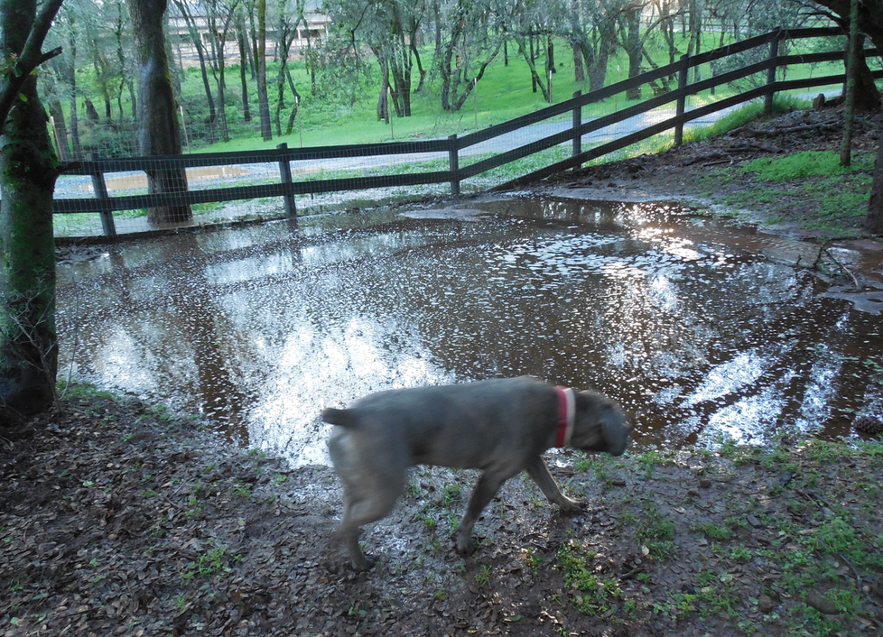 Scouty helped me survey the new, large pond at the bottom of the property.