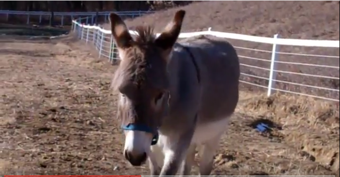 Click image to watch a video of Smoke in his home pasture on Christmas Day, 2011!