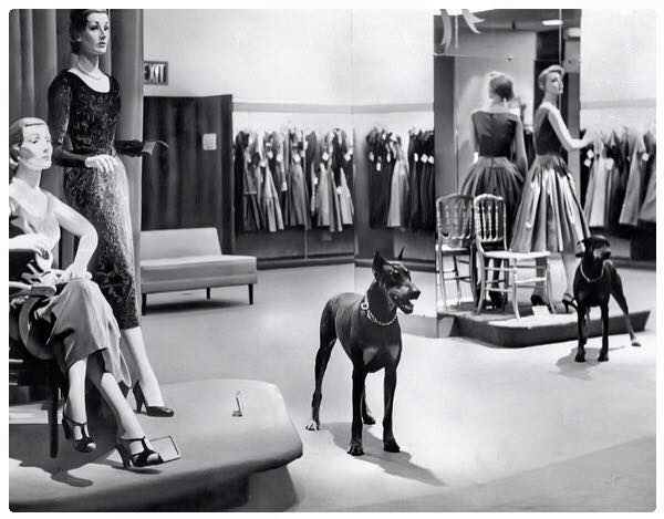 a team of four Doberman Pinschers guarded Macy's Herald Square store after hours. Two of them, seen here, Red Star and Mom, patrolled the Women's dress department