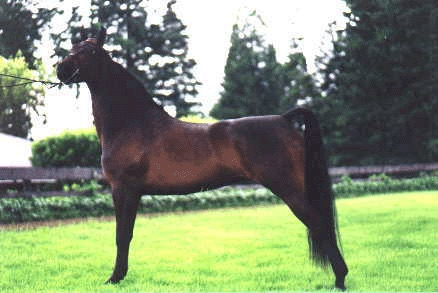 This is Gwen (Mama Tess' first foal) when she was showing. I have kept her all these years. She is 20 now.