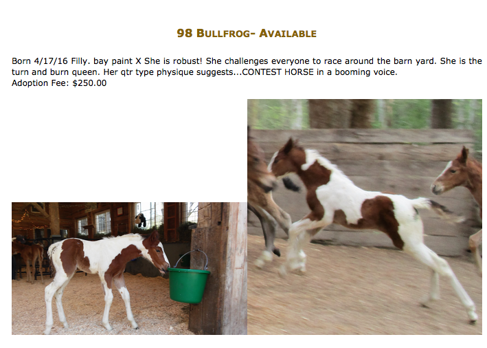 A nurse mare foal currently available from Last Chance Corral.