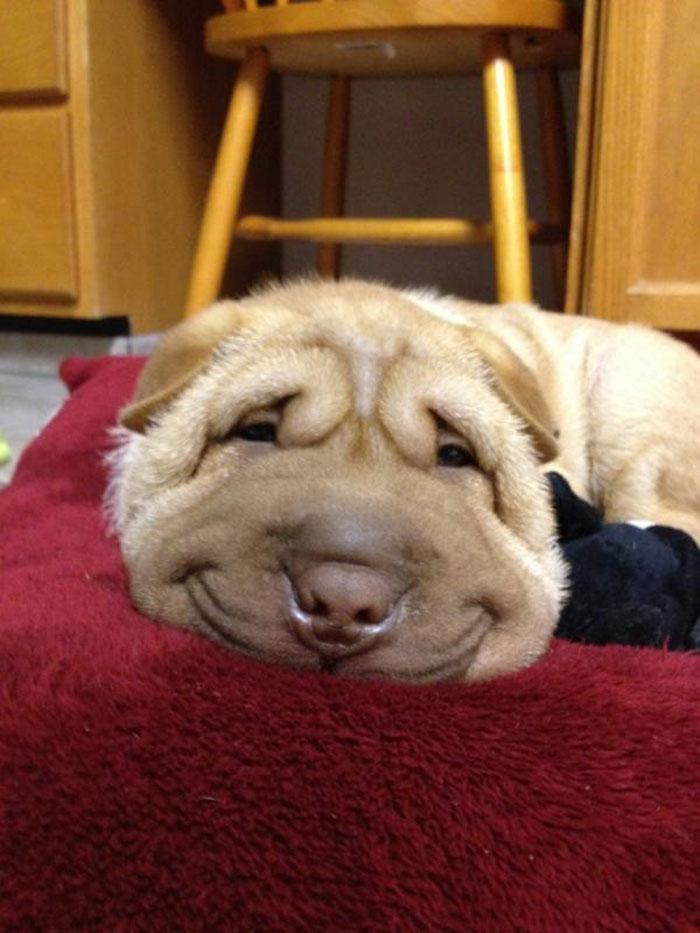 perros-sonrientes-6
