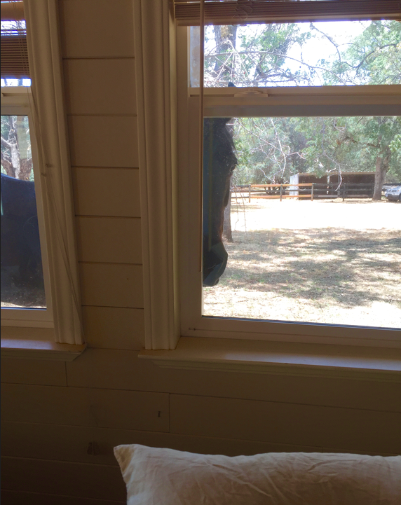 I didn't have a photo of BG's clean eye, so instead I'm showing you Gwen peeking in at me as I was napping today. (I'm sleeping on an air mattress in the living room of the Grass Valley house, waiting for the hauler to transport the horses.)