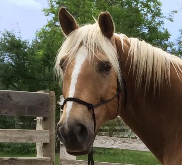 Handsome Apollo.