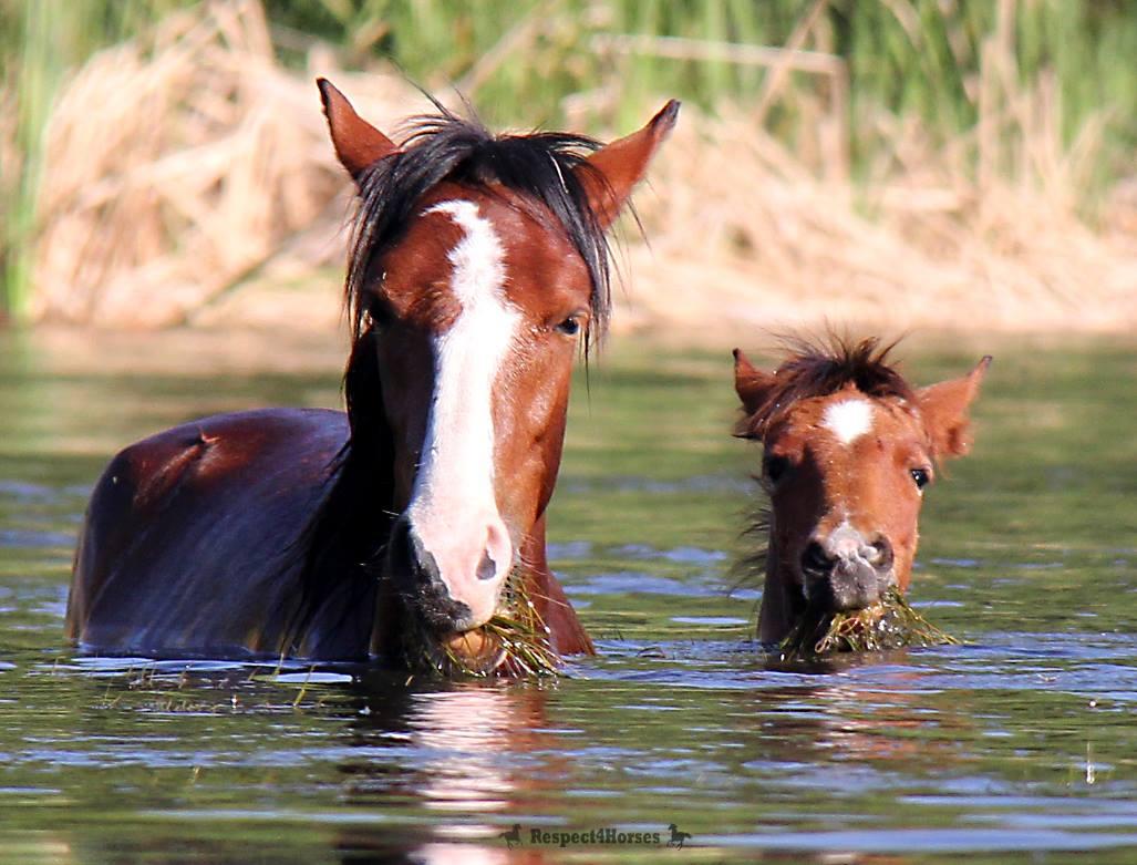 Salt River Wild Horses. Gorgeous.