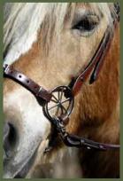 Um vídeo sobre COMO DETECTAR ÚLCEROS no seu cavalo ?!  Uau!  Muito útil... 2