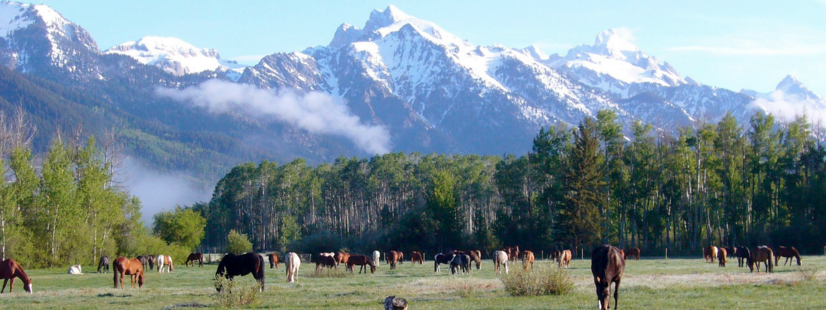This is a photo of the horses at the Ranch from the R Lazy S FB page. (click image to go to FB)