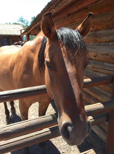 This mare came right over to me and sniffed my neck as I was taking a photo of the other horses. So, I took her photo, too! These horses are happy!