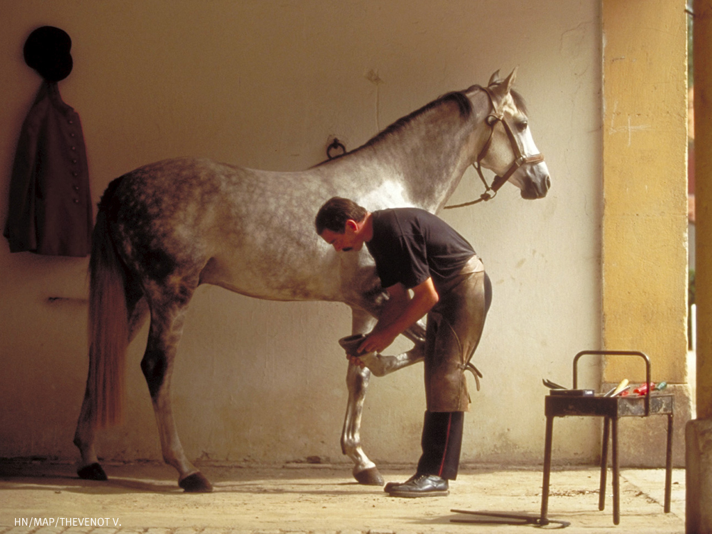 haras_nationaux_farrier_at_work
