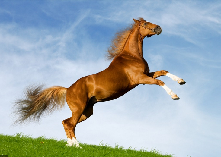 Horses are like people, they all ride at different speeds.