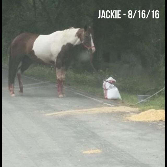 This is Jackie before her skin started sloughing. She was found tied to a sandbag.