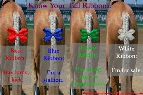 Yup, except most horses don't wear their ribbons...