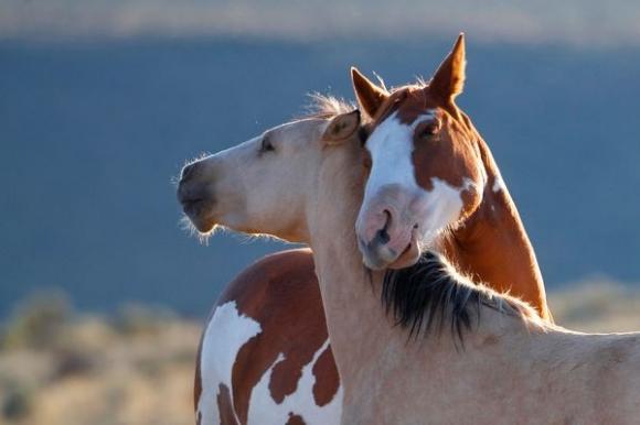 saturday  phoblog day horse  man