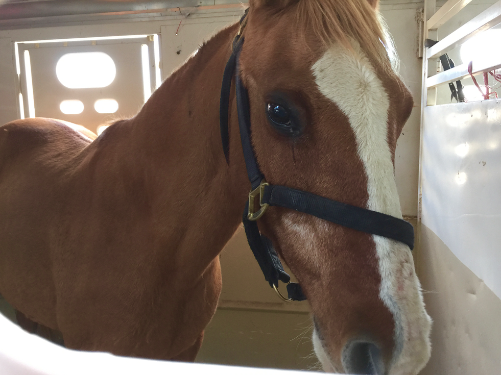 Valley View Horse Rescue Hauling has already picked up Sam and she is headed back home!