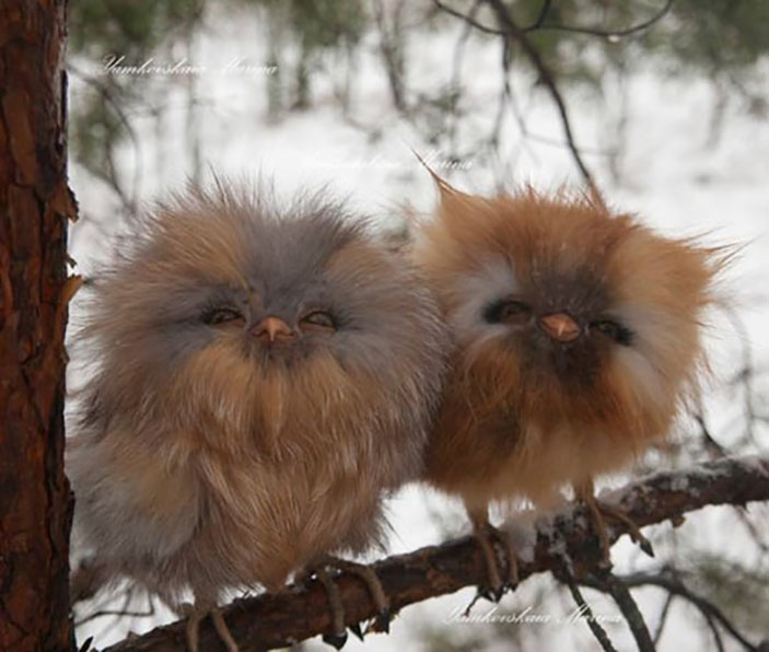 these-fluffy-baby-owls