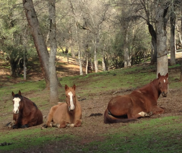 Remi, Sam and Rojo at the Grass Valley Ranch.