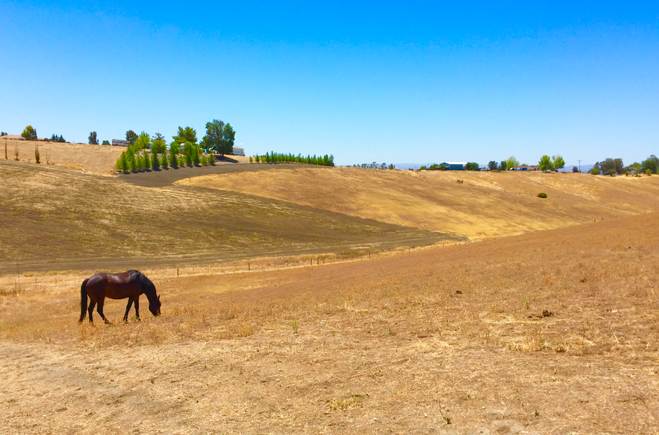 I used this photo of Annie in the big pasture for our AirBnB listing...