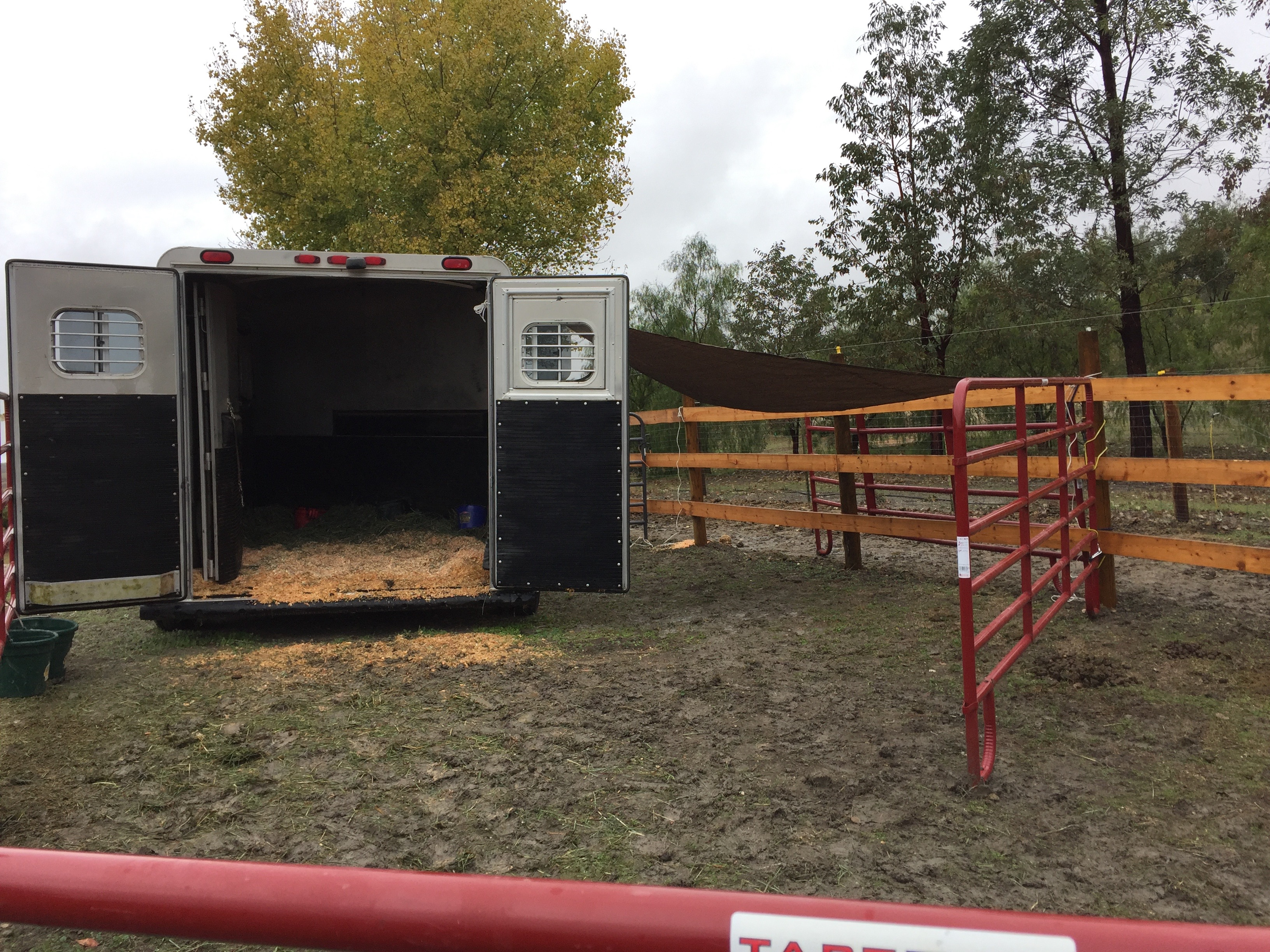 I then put another set of panels to force him inside during heavy rain. He isn't afraid of the trailer, he just likes to stand in the rain - he always has. But before, I had a barn. Now, we make due until a barn is built!