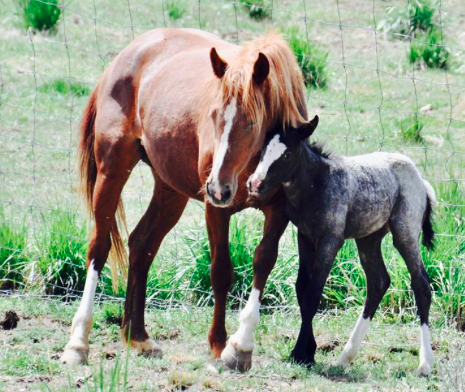 Mama And Newborn Quot Welcome Home Girls Quot A Wonderful