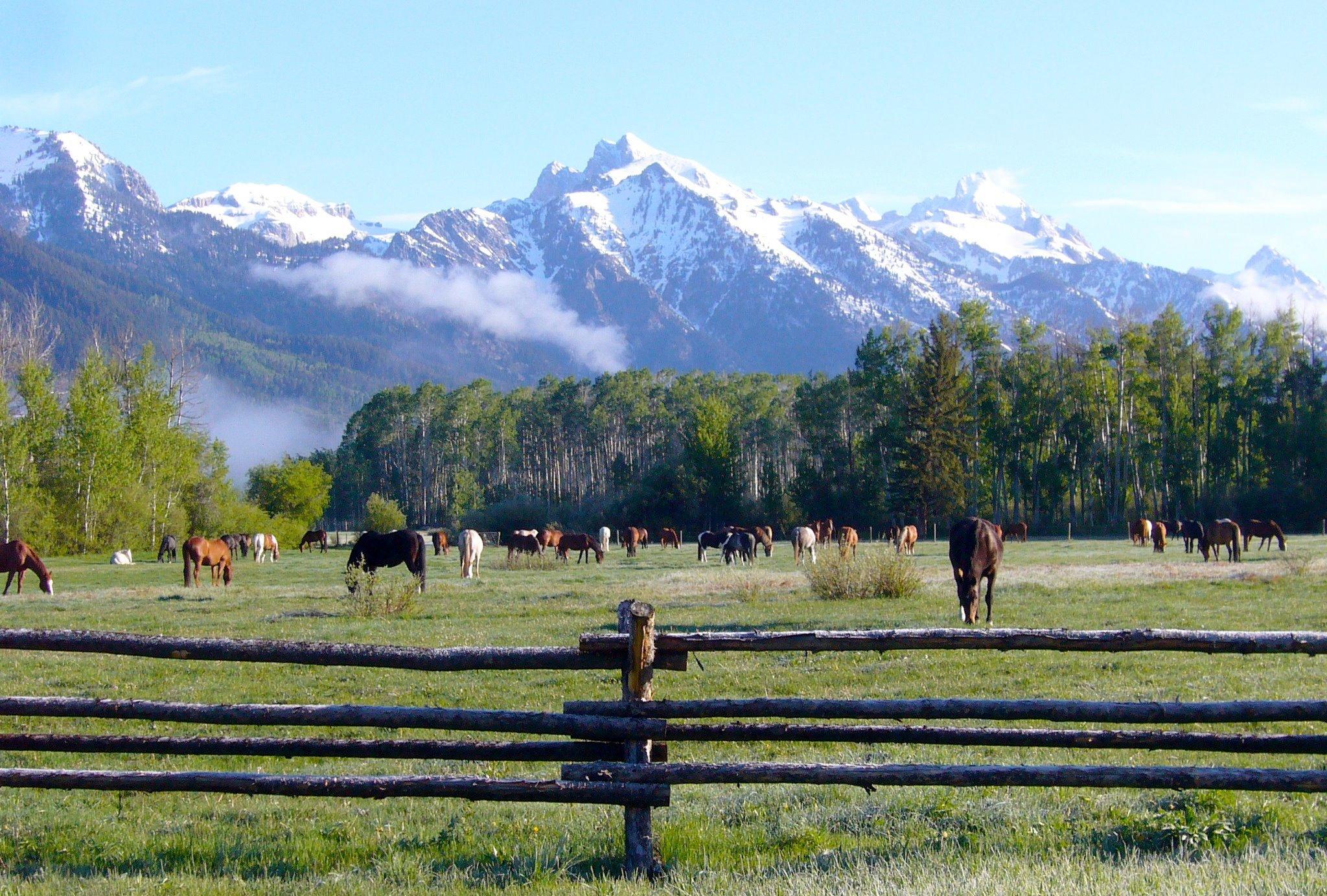 Nossa viagem anual a Wyoming e ao R Lazy S Ranch - foi cancelada. Mas eu tenho essas fotos frescas! 9