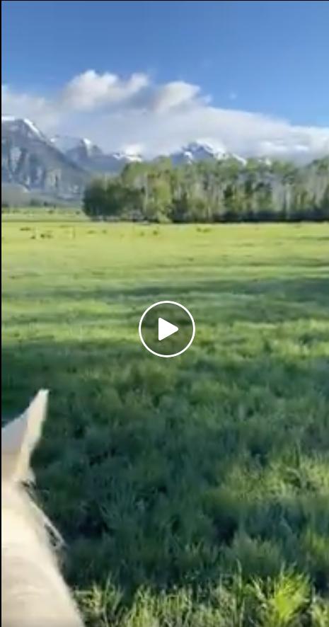 Nossa viagem anual a Wyoming e ao R Lazy S Ranch - foi cancelada. Mas eu tenho essas fotos frescas! 13