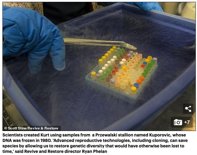 Cientistas clonam cavalos selvagens pela primeira vez usando amostras de DNA de 40 anos para ajudar a salvar as espécies ameaçadas de endogamia 5