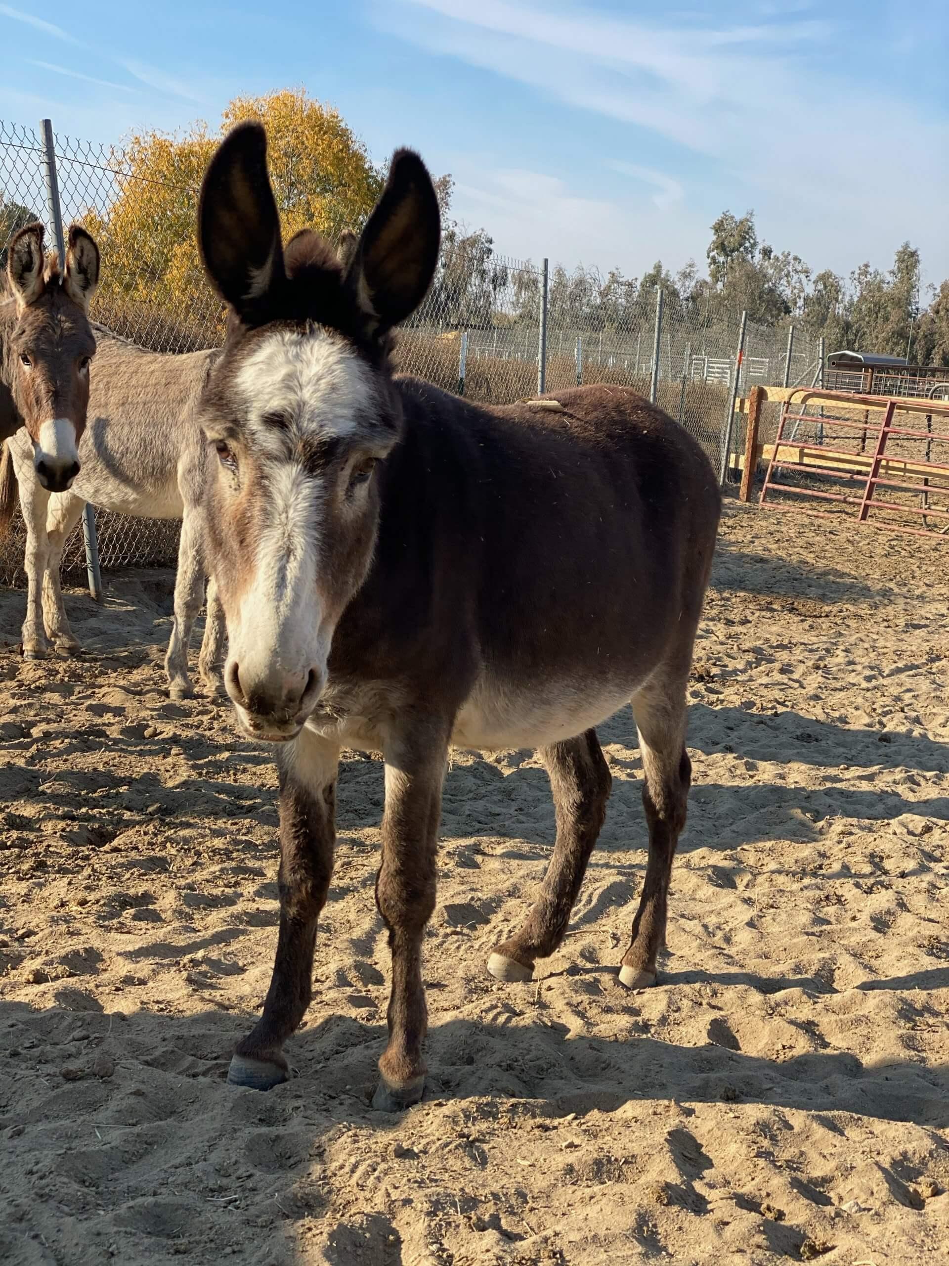 VAMOS TRAZER PARA CASA ESSES PÔNEIS!  E alguns burros também ... 4