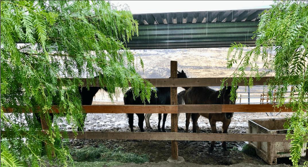 Um dia muito, muito, muito chuvoso. 4