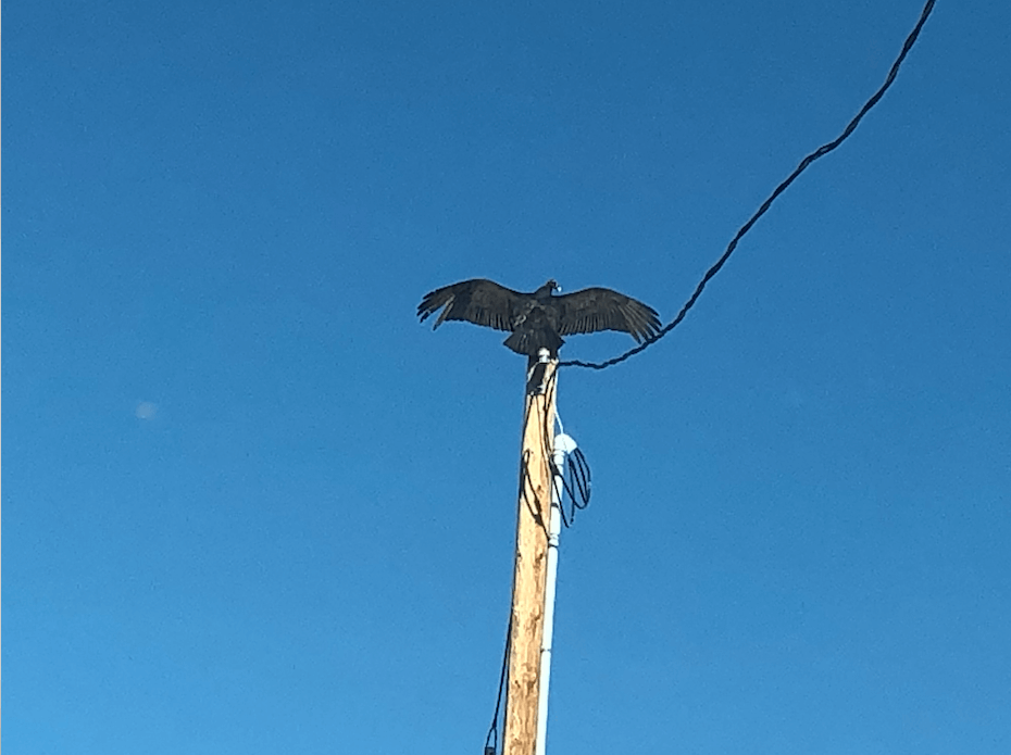 Um abutre na minha garagem Na postura Horáltica 3