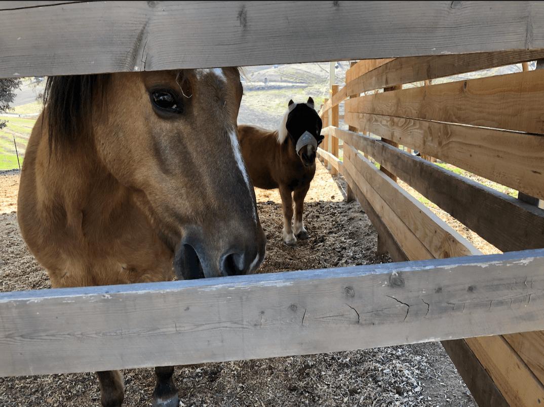 Uma fuga, uma paixão pelo Pony King - e um acerto de contas. 1