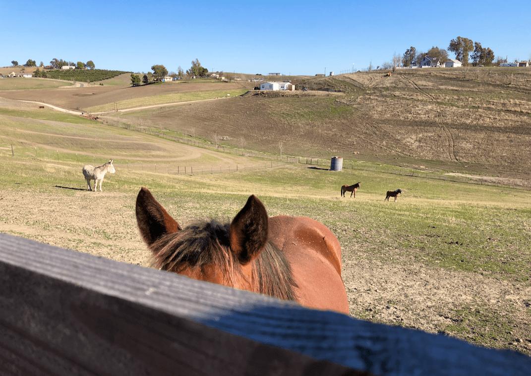 Uma fuga, uma paixão pelo Pony King - e um acerto de contas. 5