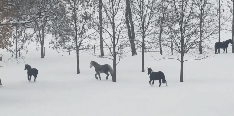 Observe um cavalo praticar o corte … quando não houver nenhum humano por perto.