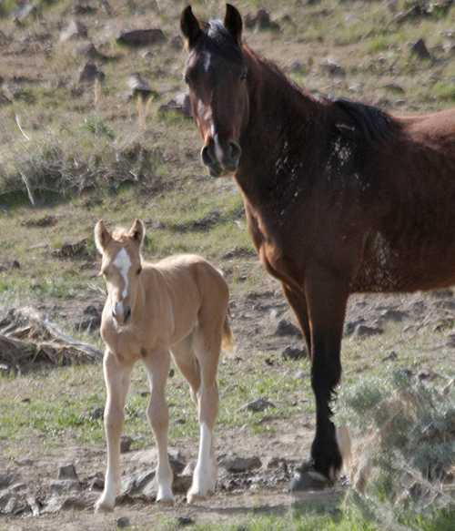 Here she is with her dam in April 2011!