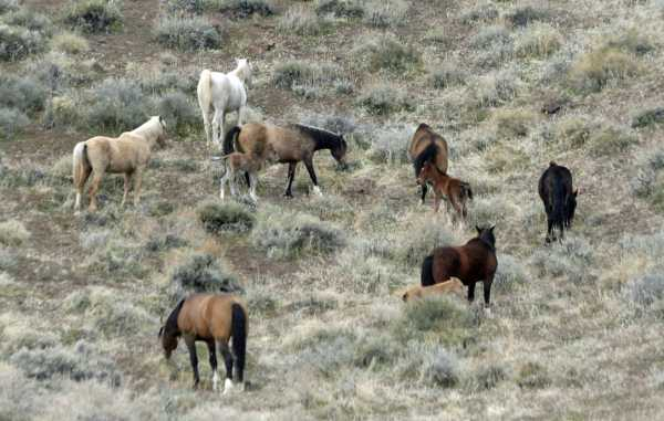 In the herd, lower right