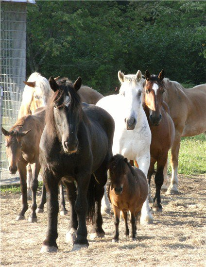 One of the hundreds of photos of Cupcake and his herd posted on his FB page.