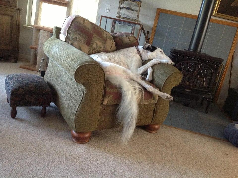 My friend's dog... comfy!