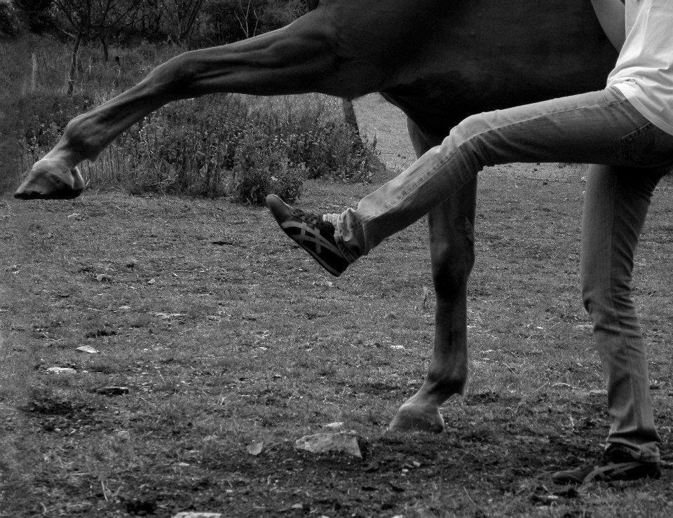 This is something I wish my horse would do...