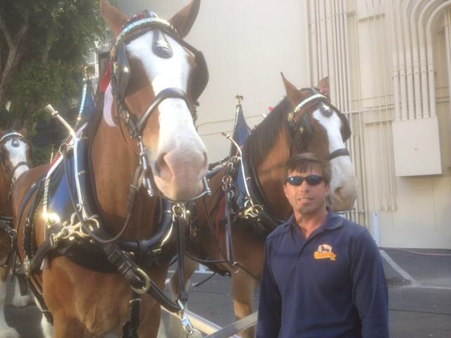 The horses all gussied up!